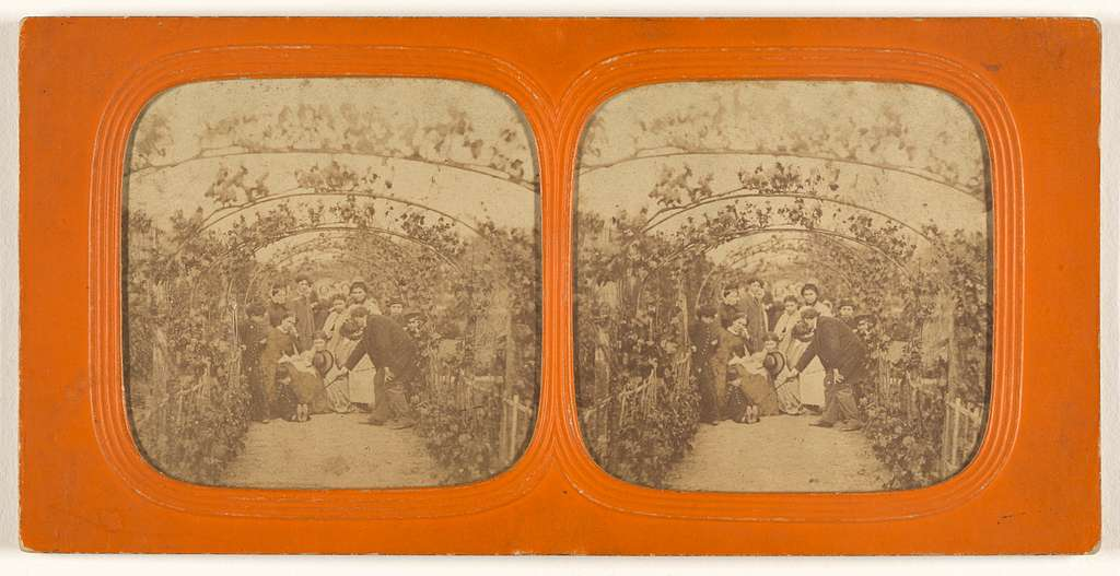 [Group of people under a series of grape vines]