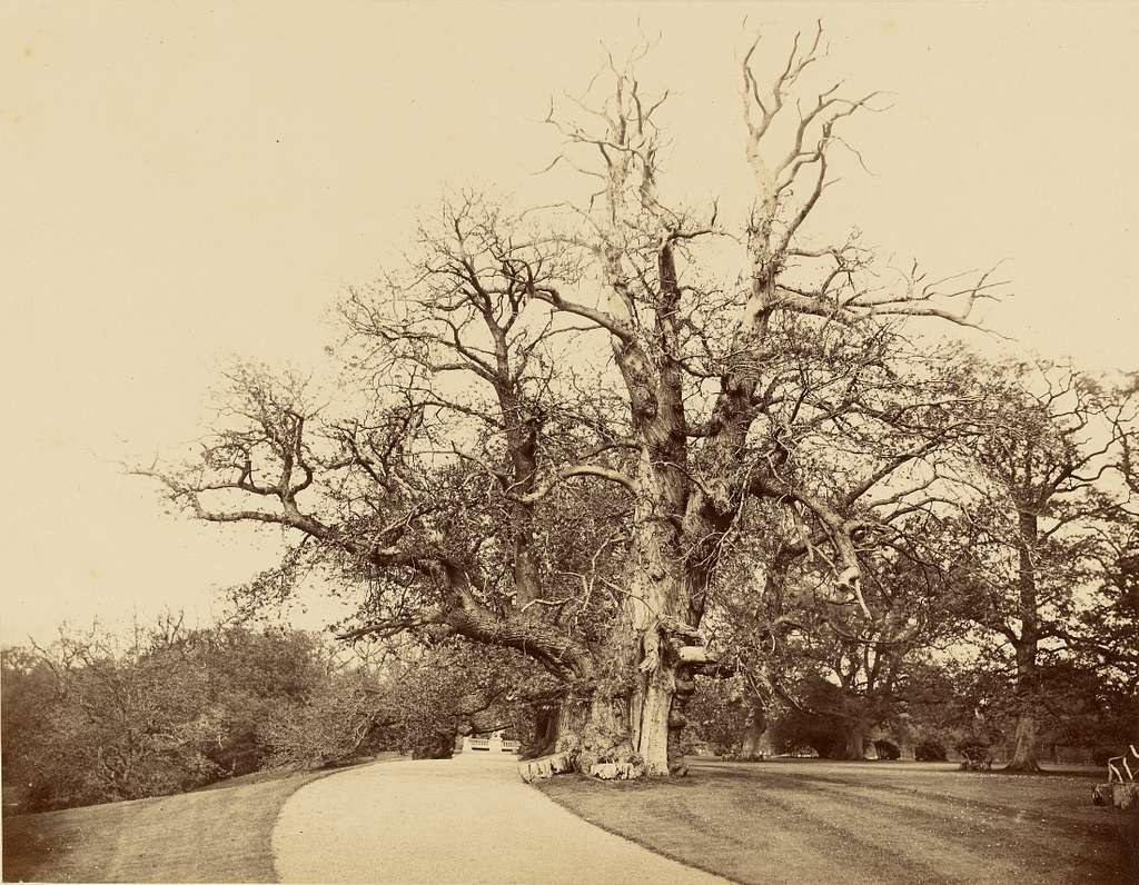 [Study of Tree and Driveway]
