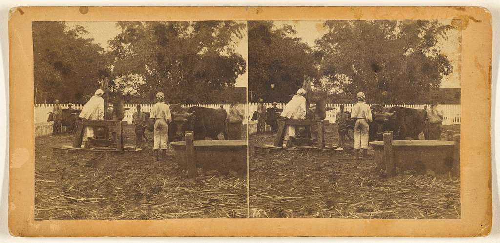 Plantation View. Scene at the Pump.