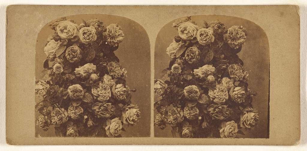 [Wreath of roses]