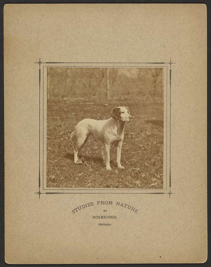 [Dog in field]