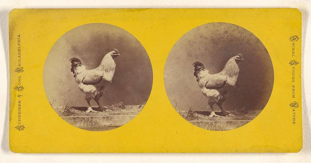 [Chicken]