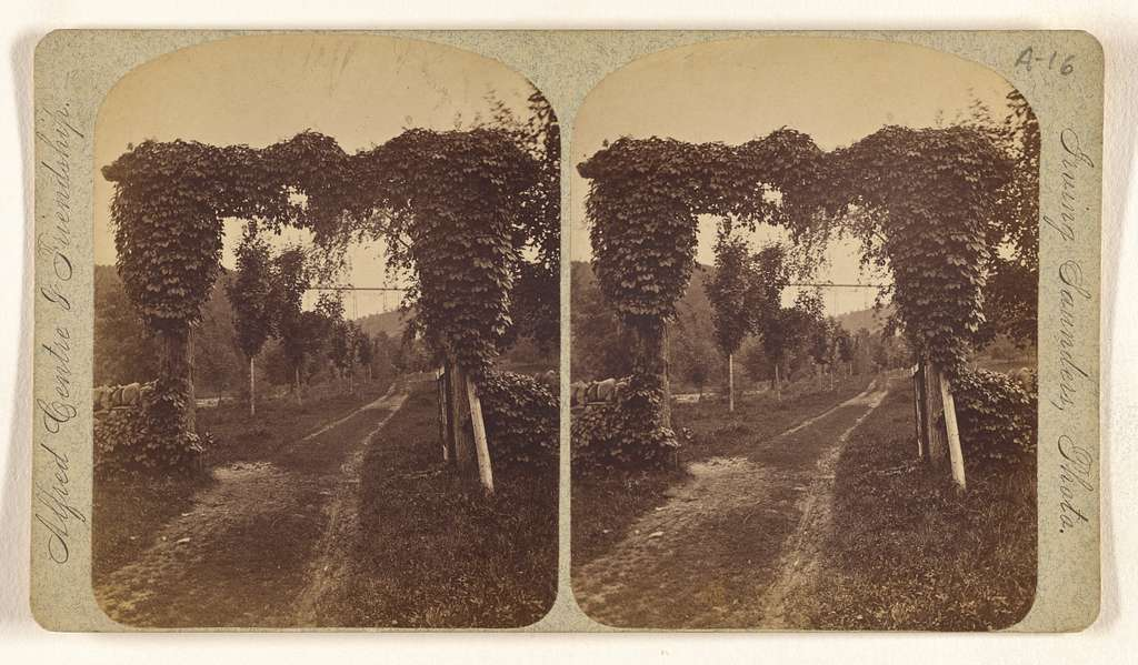 [Restage (?), N.Y., looking up from Letchworth's]